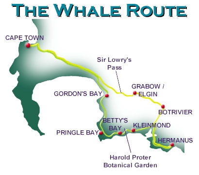 Whale Route